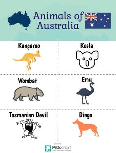 Animals to See in Australia! Add this to your travel bucket list. :)
