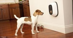 Owners can stay in contact with their pooch using video phone for pets