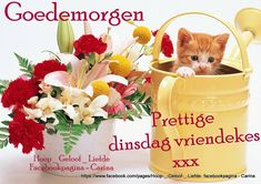 Spring Bouquet and Kitten - Desktop Nexus Wallpapers Spring Wallpaper, Cat Wallpaper, Mobile Wallpaper, Spring Bouquet, Spring Flowers, Boquet, Flower Mobile, Puppy Images, My Best Friend