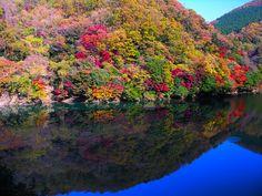 Kourankei,kooyoo(autumn leaves)Aichi,Toyota