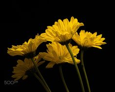 Yellow Elegance 0302 by Thomas Jerger on 500px