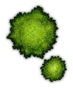 Bush 3_VH.png (500×600)