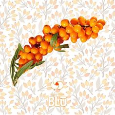 We seek out premium ingredients from across the globe 🌎 for our revolutionary products such as Sea buckthorn berries are commonly found in the Himalayas and provide nutrients that help support your body's systems — enabling you to be your BEST you! Green Algae, Cosmetic Shop, Under Eye Bags, How To Increase Energy, Live Long, People Around The World, How To Fall Asleep, Online Shopping, The Cure