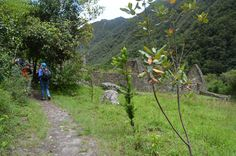 The Inca Trail Machu Picchu 2 days is ideal for people who do not have time to explore the full Inca Trail. Machu Picchu, Trail, Hiking, Tours, Explore, Mountains, Nature, Walks, Naturaleza