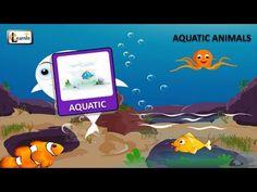 Aquatic animals or animals in water   Animals video for kid   Kindergarten learning videos playlist