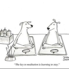 Always thinking of what training means to us dogs. Yoga for dogs. #dogs