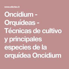 Oncidium - Orquídeas - Técnicas de cultivo y principales especies de la orquídea Oncidium