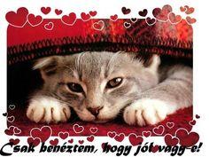 Good Morning, Smile, Animals, Figurative, Buen Dia, Animales, Bonjour, Animaux, Animal