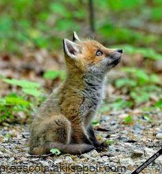Kleiner ♥ – cute animals and pets – – Svenja Schwarz - Baby Animals Nature Animals, Animals And Pets, Cute Baby Animals, Funny Animals, Funniest Animals, Cute Fox, Tier Fotos, Cute Creatures, Dog Toys