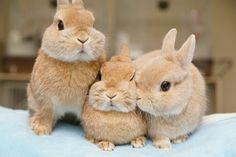 3 little bunny rabbits! Cute Baby Bunnies, Funny Bunnies, Cute Babies, Animals And Pets, Funny Animals, Bunny Care, Fluffy Bunny, Tier Fotos, Cute Little Animals