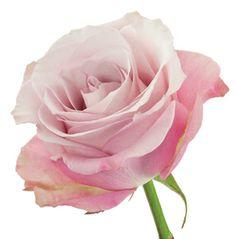 """secret Garden"" | Delaware Valley Wholesale Florist"