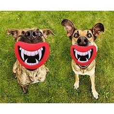 Dog Teeth Silicon Toy       Great deal .Check it out >>>>>   http://amzn.to/1TsX8E0