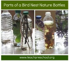 Parts of a bird nest in a nature bottle – Teach Preschool