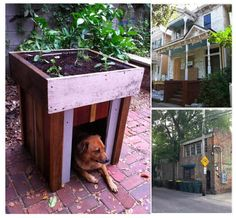Dog house with rooftop garden: http://www.recyclart.org/2012/01/dog-house-rooftop-garden