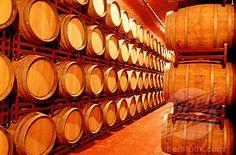 cellar wine barrels