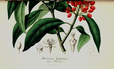 The Biodiversity Heritage Library works collaboratively to make biodiversity literature openly available to the world as part of a global biodiversity community. Plant Pictures, Illustration, Plant Leaves, Literature, Berries, Plants, Image, Literatura, Illustrations