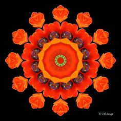 Mandala ''Mohnblume orange''   Kreatives by Petra #mandala #foto #fotographie #naturfotografie #macro #photo #natur #nature #sommer #summer #belvedere #botanischergarten #wien #vienna #blumen #flowers #orange #mohnblume #poppy Petra, Orange, Photoshop, Poppies, Halloween, Canon, Decor, Mandalas, Photos