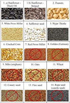 Can wild birds eat chia or flax seed? - Can wild birds eat chia or flax seed? Homemade Bird Feeders, Diy Bird Feeder, Wild Bird Feeders, Bird Suet, Wild Birds Unlimited, Bird Seed Ornaments, Bird Feeding Station, Wild Bird Food, How To Attract Birds