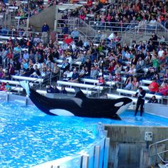 Sea World Florida, one of my most favorites.  I never get tired of Sea World no matter what age,