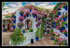 Love this my mexican courtyard....... >>> See more by checking out the image