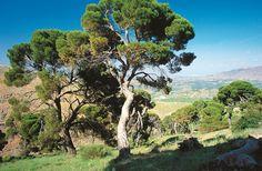 Pinar de Cánava  Jimena  -Jaen