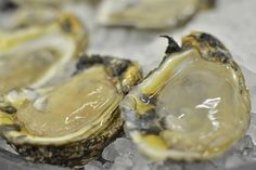 Stop by SHUCKS! for the best fresh seafood in Abbeville. Our restaurant menu boasts a variety of local favorites & something for everyone! Seafood House, Seafood Restaurant, Best Oysters, Lafayette Louisiana, Louisiana Seafood, Dirty Rice, Seafood Platter, Fresh Seafood, Jambalaya