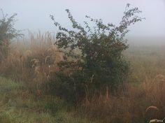 Strauch im Nebel