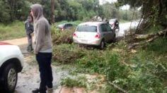 #Cidades: Chuva forte derruba árvore e atinge um veículo em Ibiúna