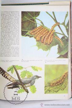 Libros de segunda mano: Libro Naturalia. Enciclopedia Ecológica Ciencias Naturales. Vol III. La Fauna Silvestre - Codex,1965 - Foto 5 - 50515355