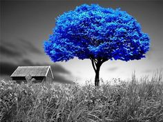 alone blue Blue Tree Nature Other HD Wallpaper