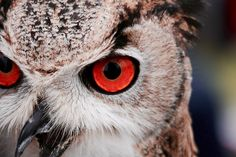 Owl eyes wallpaper from Happywall Eyes Wallpaper, Planets Wallpaper, Photos Of Eyes, Cool Photos, Dating A Narcissist, Wild Pictures, Owl Eyes, Ways Of Seeing, Wall Murals