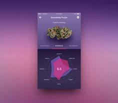 GranDaddy Purple Strain designed by Michael Pons for Crown & Mane. Connect with them on Dribbble; Mobile Ui Design, App Ui Design, User Interface Design, Web Design, Design Layouts, Flat Design, Grafico Radar, Mobiles Webdesign, Data Dashboard