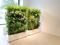 Petrified artificial green wall vertically placed at Columns .Totally love this - Get this look with our stunning artificial green wall. Take a look at our website. Different plant options available Artificial Indoor Plants, Small Indoor Plants, Indoor Plant Wall, Fake Plants, Potted Plants, Artificial Flowers, Bamboo Plants, Plantador Vertical, Vertical Gardens