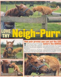 cat loves horse | Horse_Cat.jpg horse love cat