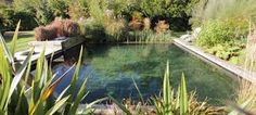Image result for plumbing a natural swim pond