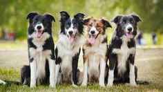 Thinking of adding a dog to your family? Research shows it's a good idea for your health — and the health of your kids.