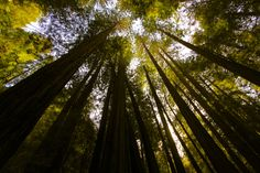 Muir Woods. | 21 Reasons Marin County Is The Most Beautiful County