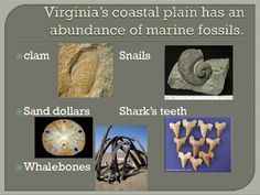 This PowerPoint describes what a fossil is.