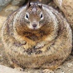 Awwwwwwwwww im dying! Fat squirrel!!!