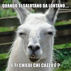 #ridere#humor#satira#umorismo