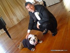 Adam Sandler has three Bulldogs: Matzo Ball, Meat Ball and Babu. Meatball was his first Bulldog and was present at his wedding as ring bearer in full costume.