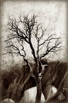 "Buy Tree of Dreams, a Digital on Paper by Mona Itani from France. It portrays: Tree, relevant to: rock, texture, textured, tree, nautre, sand stone, desert, landscape, monochrome, mountain Tree in the desert of California. ""The Mojave Desert"" From the Series of ""Trees"""