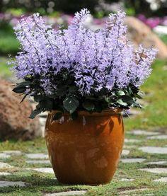 Você tem uma pequena varanda ensolarada e quer flores? Ou só uma sacada? Tem vento? Que bom! Vou lhe dar algumas sugestões (flor é tudo de bom!)