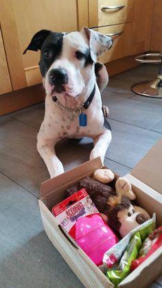 Zanto - DoggieBag.no #DoggieBag #Hund Plastic Laundry Basket, Pitbulls, Organization, Dogs, Animals, Decor, Pet Dogs, Getting Organized, Animales