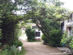 LA MOARA CU NOROC DIN OHABA | TarabacuAmintiri Noroc, Plants, House, Home, Haus, Planters, Plant, Houses, Planting