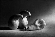 100 Examples of Still Life Photography