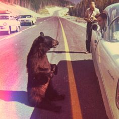 silly bear, asking for directions