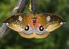24 Beautiful Butterflies and Moths - meowlogy Flying Insects, Bugs And Insects, Beautiful Bugs, Beautiful Butterflies, Flying Flowers, Moth Caterpillar, Butterfly Kisses, Chenille, Natural World