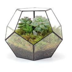 Dodecahedron Terrarium (Can$160.00) ❤ liked on Polyvore featuring home, home decor, floral decor, plants, fillers, decor, flowers, phrase, quotes and saying