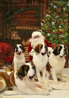 Santa Claus with his Saint Bernard Dog Helprrs Giant Dogs, Big Dogs, I Love Dogs, Cute Puppies, Cute Dogs, Dogs And Puppies, Doggies, Christmas Animals, Christmas Dog